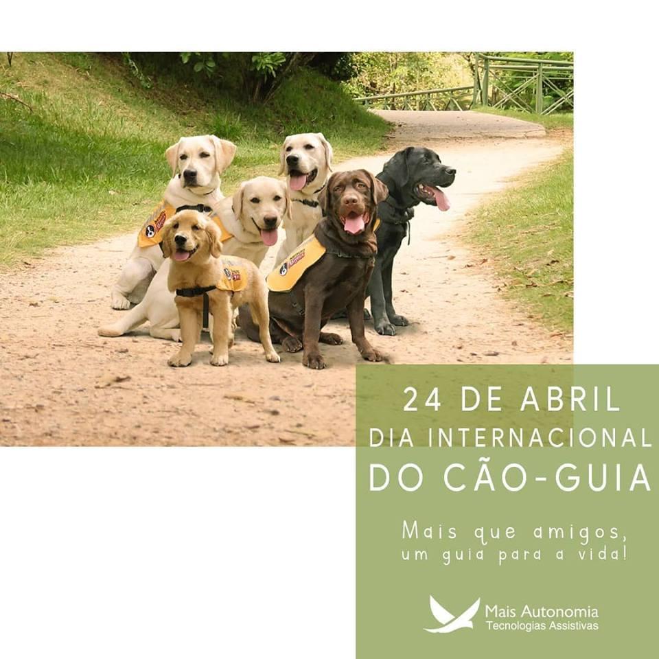 caoguia - Algumas curiosidades sobre o cão-guia
