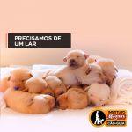 familia socializadora 150x150 - Seja Família Socializadora de um futuro Cão-Guia
