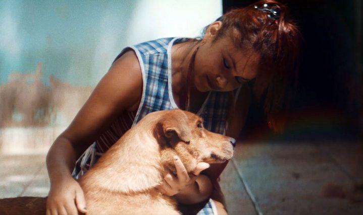 pedigree caes cegos 719x427 - PEDIGREE ensina pessoas a cuidarem de cães que ficaram cegos